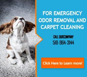 Carpet Cleaning Alameda Ca 510 964 3144 Fast Response